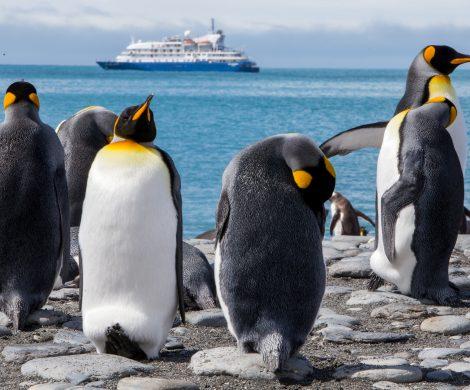 Auf einer Kreuzfahrt in die Antarktis mit der Sea Spirit winken tolle Tiermotive