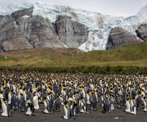 Große Pinguinpopulationen kann man während dieser Reise oft beobachten