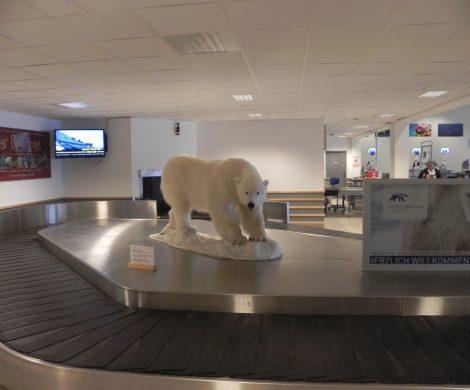 Bereits am Gepäckband des Flughafens Longyearbyen steht ein Eisbär