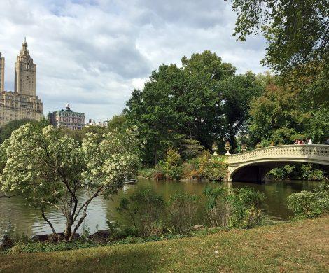 Spazierengehen im Central Park