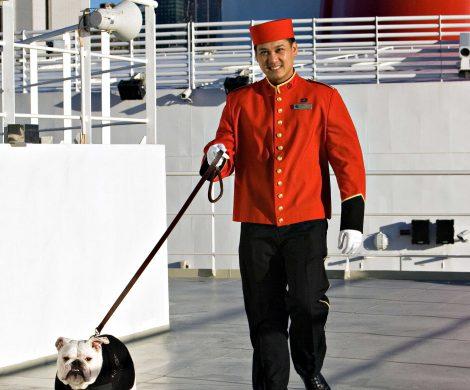Ein extra ausgebildeter Dogmaster kümmert sich um die Tiere