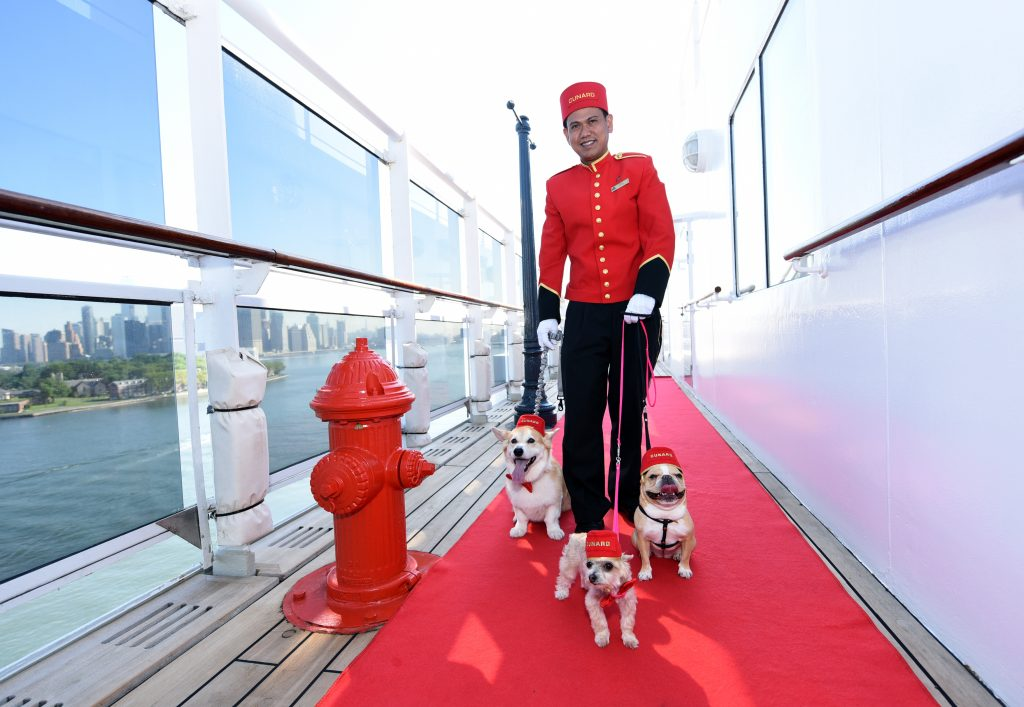 Auch im Urlaub darf der eigene Hund den meisten Haltern nicht fehlen, auch eine Kreuzfahrt mit Hund ist möglich. Doch nicht immer und überall darf der Vierbeiner mitkommen.