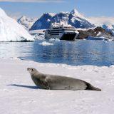 Die französische Kreuzfahrtreederei Ponant und National Geographic Expeditions bieten erstmals gemeinsame Reisen in die Polar- und Warmwasserregionen an.