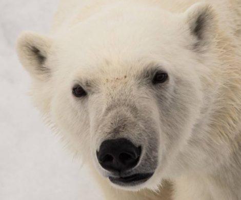 Polaris Tours bietet in seinem neuen Katalog Arktis & Antarktis 2019/2020 insgesamt 40 unterschiedliche Kreuzfahrten und Expeditionen mit vielen Terminen