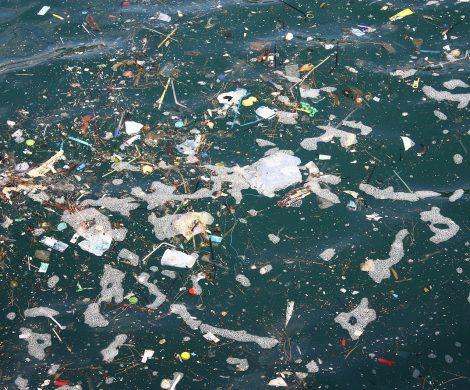 Um Nord- und Ostsee ist es nicht gut bestellt: Der Nährstoffeintrag ist zu groß, die Schadstoffbelastung ist zu groß, die Vermüllung ebenfalls.