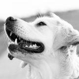 """Bei der Kontrolle von Partygästen der Techno-Kreuzfahrt """"Holy Ship"""" hat ein Polizeihund eine Überdosis an Drogen abbekommen."""