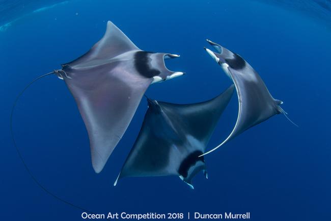 Beim siebtenOcean Art Underwater Photo Contestvom Underwater Photography Guide wurden die besten Unterwasserfotos 2018 gekürt.