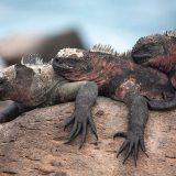 mitwww.worldwidewave.dekann man jetzt bei Galápagos-Kreuzfahrten richtig sparen: Ab sofort gibt es300 Euro pro Kabineauf Galápagos-Kreuzfahrten