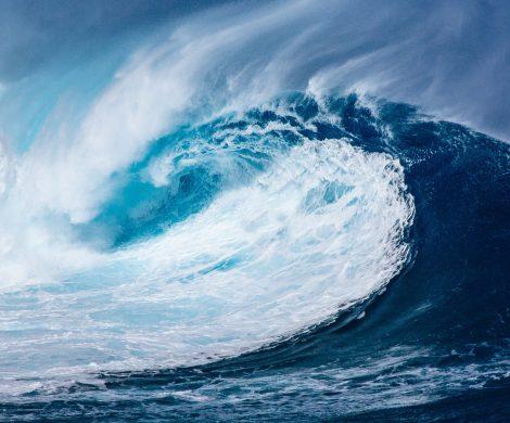 Gemeinsam mit der Climate Foundation und der University of Tasmania finanziert die Intrepid Foundation ein neues Projekt zur marinen Permakultur.