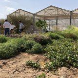 Die Costa Gruppe arbeitet ab sofort durch die Costa Crociere Foundation mit der Sahara Forest Project Foundation zusammen. Ziel der Kooperation ist es, die Wiederbepflanzung der Wüste in Jordanien mit nachhaltigen Technologien zu stärken und weiter voranzutreiben.