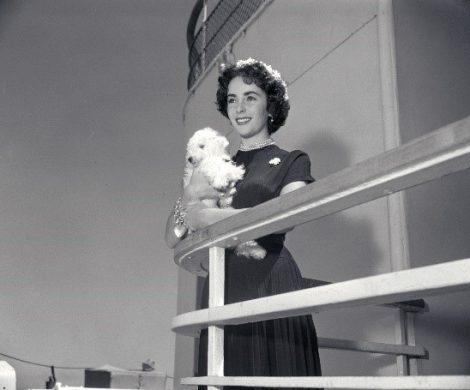 """Auf der Transatlantik-Passage wurde die Queen Mary 2 zum Drehort des neuen Films """"Let Them All Talk"""" des Oscar-prämierten Regisseurs Steven Soderbergh"""