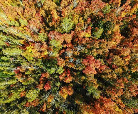 Wald im Indian Summer