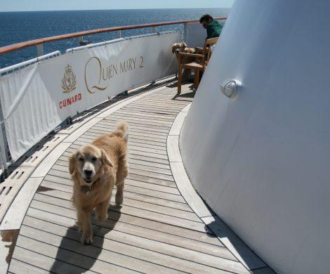 Auf der Queen Mary 2 haben Hunde einen eigenen Deckbereich mit Auslaufmöglichkeiten