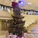 Ohne Weihnachtsbaum geht nichts:Ein Weihnachtsfest ohne Tannenbaum ist laut Umfragen für mehr als 92 Prozent aller Deutschen unvorstellbar. Darauf haben sich die Reedereien eingestellt, in der Weihnachtszeit wird auch an Bord mindestens ein Baum geschmückt.