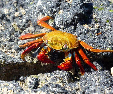 Krabben und Krebse sind knallbunt