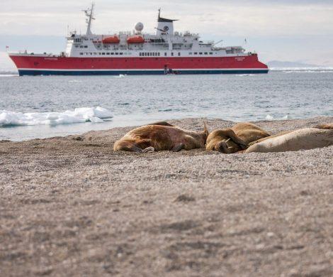 Abenteurer, die schon lange von einer Polarreise träumen, können beim Erlebnisreiseveranstalter G Adventures jetzt richtig sparen. Antarktis-Kreuzfahrer erhalten 20 Prozent Ermäßigung und für eine Arktis-Expedition um Spitzbergen gibt es eine Ersparnis von knapp 800 Euro auf den regulären Reisepreis