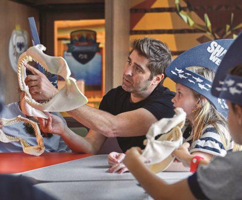"""Jetzt können Kreuzfahrtpassagiere, die den Nervenkitzel (und Tiere) lieben, sogar Haitauchen. Beim """"Summer of Shark"""" haben Gäste von Princess Cruises diesen Sommer die Gelegenheit viel über Haie zu lernen."""