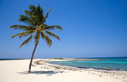 MSC renaturiert die Privatinsel Ocean Cay (Bahamas) in ein Naturparadies mit Unterwasserwelt, ab November 2019 werden dort vier MSC-Schiffe anlegen