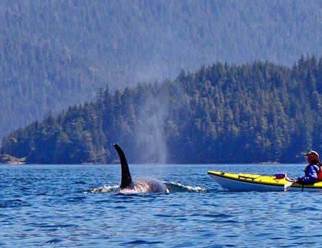 Natur, Abenteuer, Tierbeobachtung – diese Mischung bietet die viertägige Erlebnisreise Orca Camp des Reiseveranstalters Dertour.