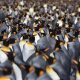 Ab sofort gibt es 800 Euro pro Kabine auf Antarktis-Kreuzfahrten mit Silversea-Schiffen – wenn Sie über den Spezialveranstalter Polaris Tours, direkt buchen
