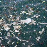 Wegen Meeresverschmutzung hat ein Gericht in Miami die Reederei Carnival zu einem Vergleich mit einer Geldstrafe von 20 Millionen US-Dollar gedrängt