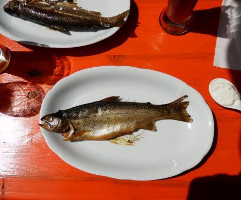 Enjoy your Catch heißt das neue Erlebnisprogramm von Seabourn: Frischer Fisch auf den Tisch und das auch noch selbst gefangen!