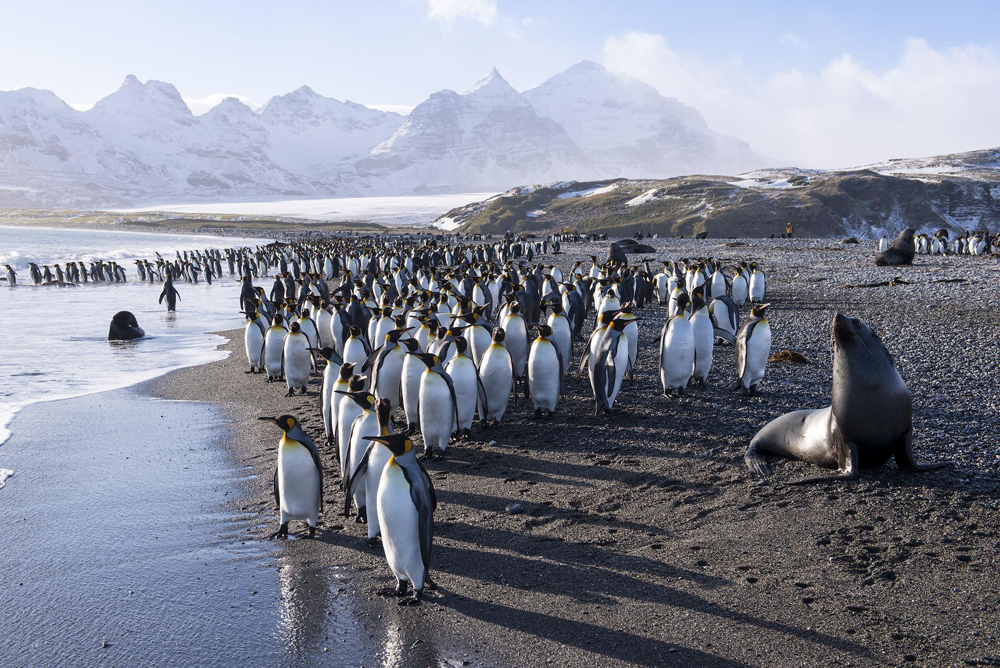 Polaris Tours hat im neuen Katalog Arktis & Antarktis 2020/2021 das Angebot weiter ausgebaut: Expeditionskreuzfahrten mit insgesamt 15 Schiffen im Programm