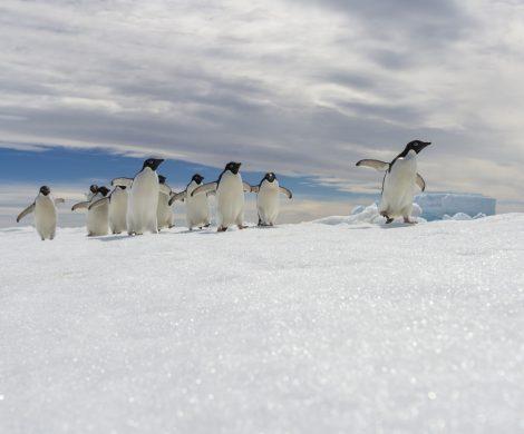 Die ultimative Expedition und ungewöhnliche Antarktisziele erleben: Mit der neuen Le Commandant-Charcot von PONANT wird dieser Traum Wirklichkeit.