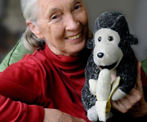 Diskutieren Sie mit Dr. Jane Goodall über die Auswirkungen von Reisen auf die Tierwel, Link: https://retravellive.com/de/