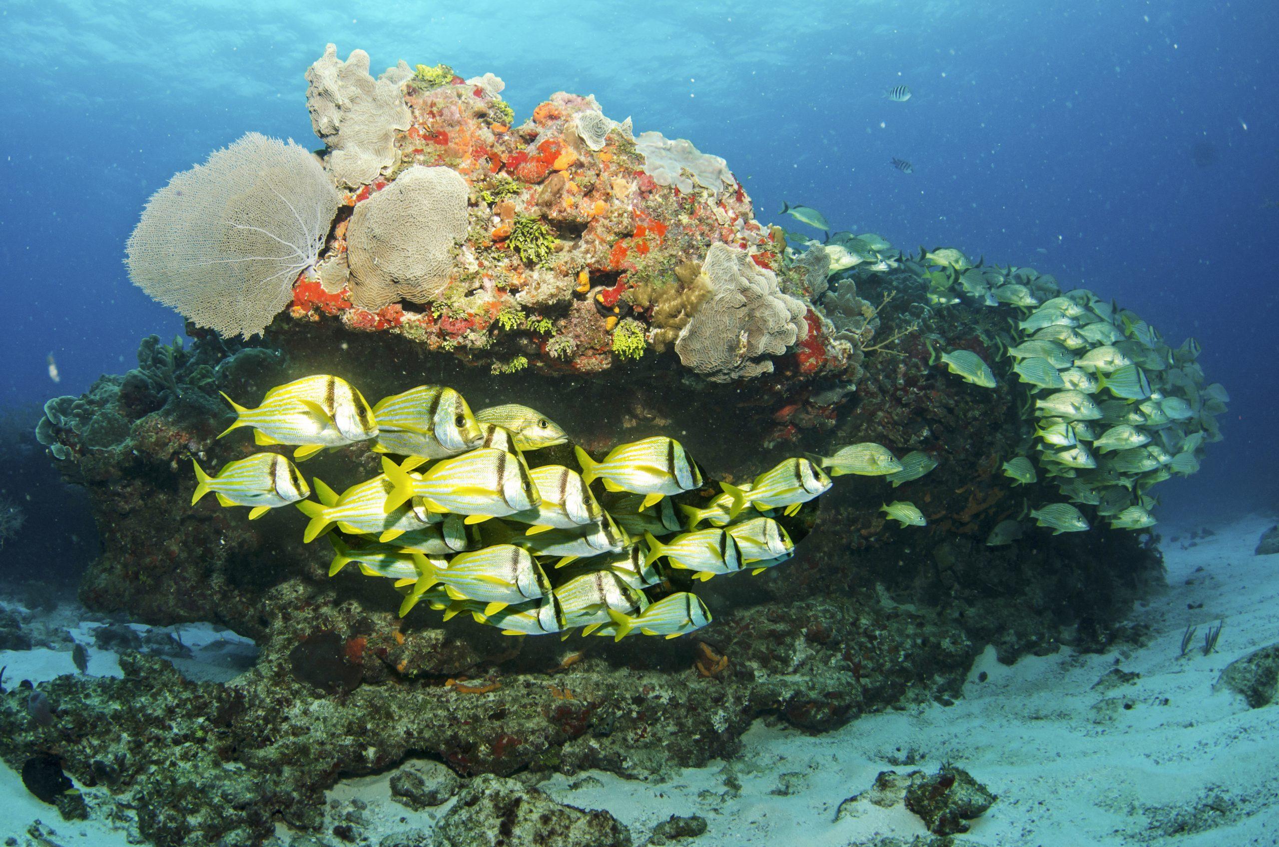 Die MSC Foundation ist mit der Ba'a-Foundation eine Partnerschaft zur Rettung von Korallen eingegangen, um die Ökosysteme zu erhalten.